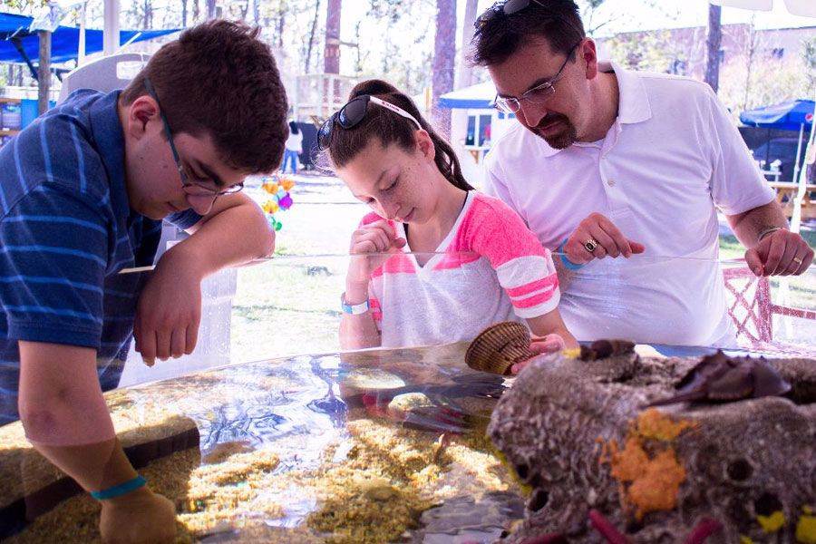 Touch invertebrates, starfish and horseshoe crabs