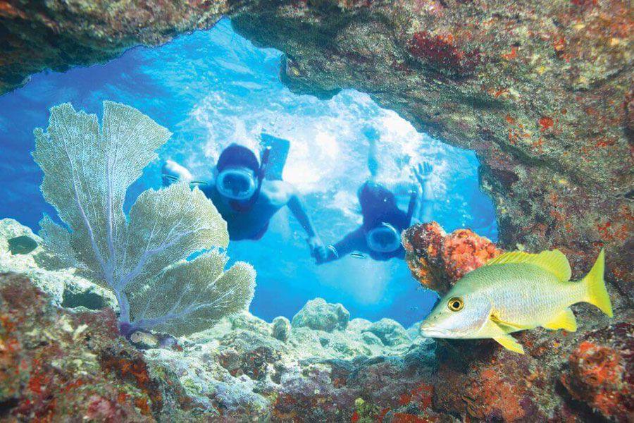 Coral reefs & tropical species unique to area