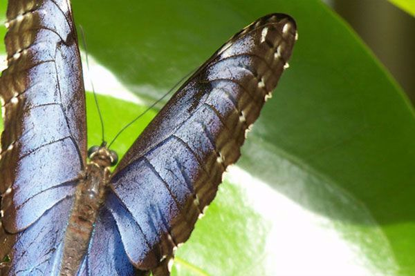 Breathtaking Journey into lives of butterflies