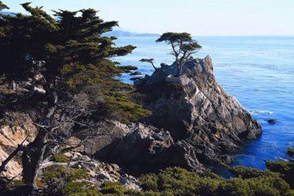 Monterey & Carmel Coastal Tour