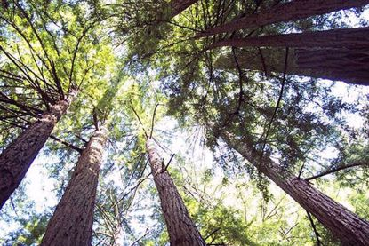 Muir Woods Tour